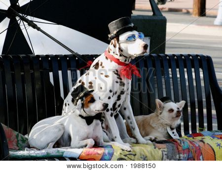 Funny Circus Dogs