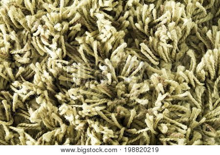 The texture of the carpet is pile. Close-up