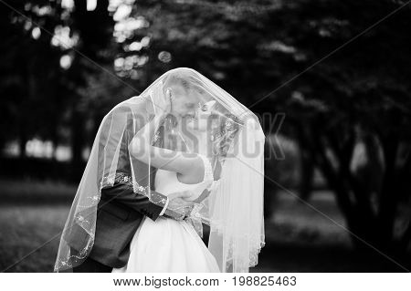 Wedding Couple Posing Under Bridal Veil Outdoor. Black And White Photo.