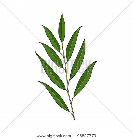 Beautiful hand drawn willow tree twig, branch, decoration element, sketch vector illustration isolated on white background. Realistic hand drawing of beautiful willow twig, floral decoration element