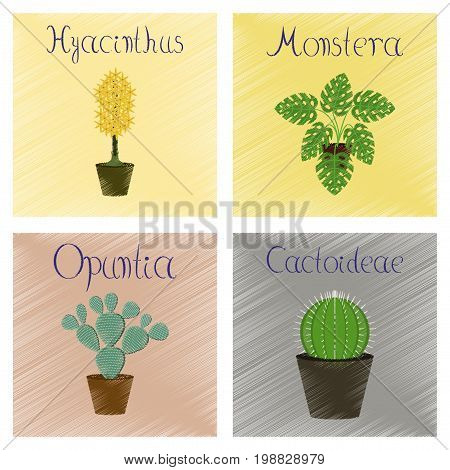 assembly flat shading style Illustrations of Hyacinthus Monstera Opuntia Cactoideae