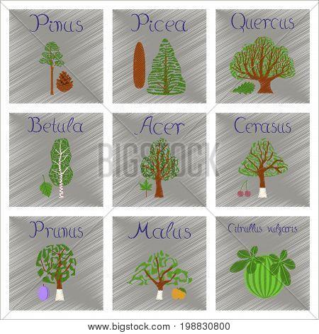 assembly flat shading style Illustrations of Pinus Picea Quercus Betula Citrullus Malus Prunus Cerasus Citrullus Populus