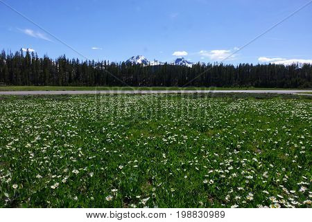 Field of wildflowers, near Stanley Lake in Idaho's Sawtooth Mountains.