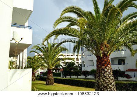 Sago Palm Latin name Cycas revoluta in Portugal