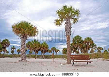 Wooden bench, with many palm trees around, at a beach on an overcast afternoon, Florida, USA