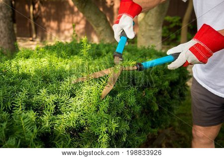 Trimming Yard Hedges