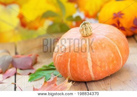 Pampkin On The Wooden Table In Autumn