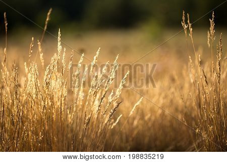The Grass Is Dry
