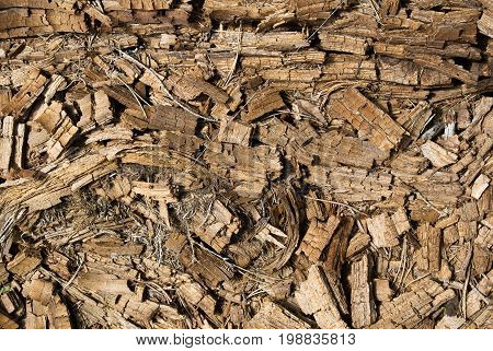 Rotted dry mouldering crushed pine tree trunk wooden natural textured background closeup. Old age death and destruction creative concept.