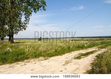 Landscape: a road in the fields and meadows