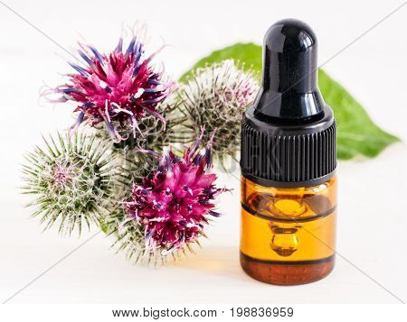 burdock oil in small glass bottle with pipette and burdock flowers on white wooden table