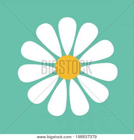 Daisy flower isolated on background. Vector stock.
