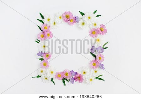 Floral frame of white and pink chamomile daisy flowers green leaves on white background. Flat lay top view. Daisy background. Mock up frame of flower buds.
