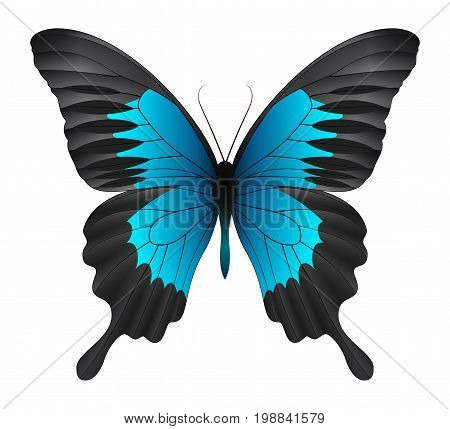 Beautiful butterfly isolated on a white background. Montrouzieri butterfly butterfly. 3D illustration