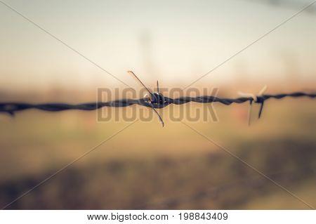 Límite en el campo de concentración de Auswchtiz Birkenau