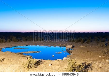 Two black rhinos Diceros bicornis drinking water at an artificially lit waterhole in Northern Namibia during the blue hour after sunset