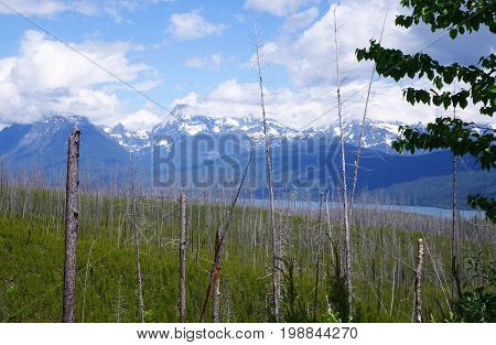 View across Montana's Glacier National Park from an old forest-fire burn area on western side of the park.