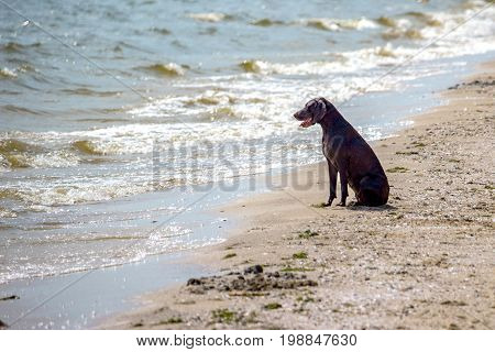 dog watching the summer vacation view on the beach thinking about life