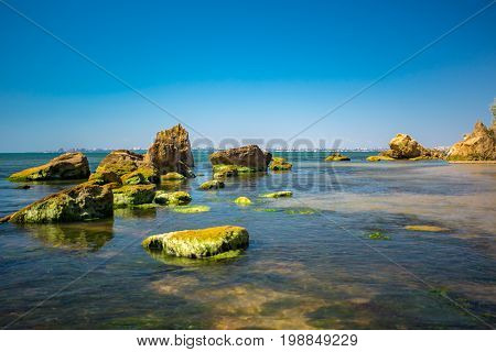 Coastal stone with green algae. Stone covered with green algae