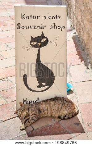 Kotor Montenegro - June 8 2017: A typical view in one of the streets in a very tourists friendly old town of Kotor with a shop sign and a cat.