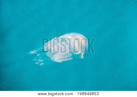 Jellyfish with its umbrella-shaped bell and trailing tentacles in the Ionian Sea near a seaside town Katakolo in West Greece.