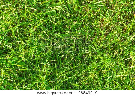 Vibrant green grass background. Green grass field photo texture. Spring banner of fresh green grass. Grass image for backdrop or seasonal card. Summer lawn top view. Playground area for summer sport
