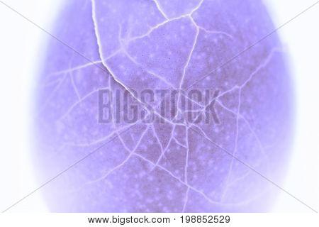 Cracked egg shell closeup texture. Crack eggshell violet toned photo. Broken egg abstract macrophoto. Toned shell texture with cracks. Reproduction medical problem concept. Broken eggshell x-ray view