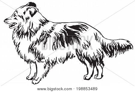 Decorative portrait of standing in profile Sheltie(Shetland Sheepdog) vector isolated illustration in black color on white background