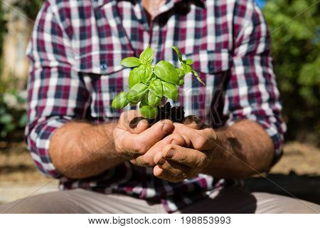Mid section of man holding sapling in garden on a sunny day