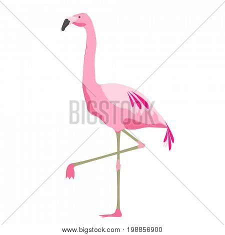 illustration, fauna and birds concept - pink flamingo over white background