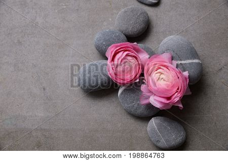 Two ranunculus and pile of gray stone on gray background