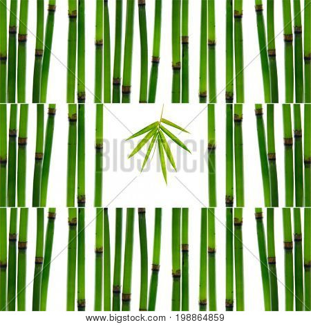 Collage of with young bamboo sticks with leaf