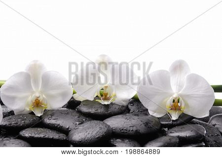 black pebbles and three white orchid on wet background