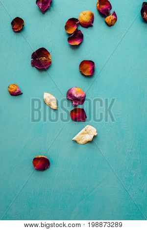 Dry rose flower petals and leaves scattered on blue background.