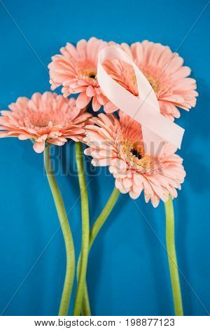 High angle view of pink Breast Cancer Awareness ribbon on gerbera flowers against blue background