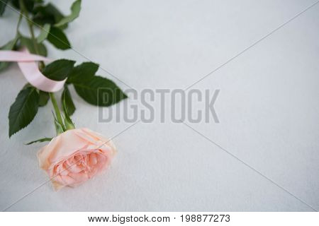 High angle view of pink Breast Cancer Awareness ribbon and rose on white background