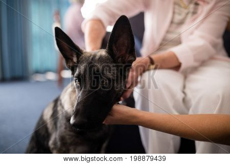 Cropped hands of female doctor and senior woman stroking dog at retirement home