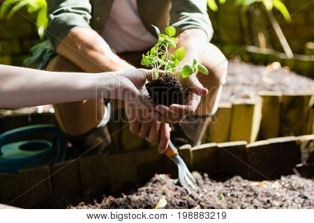 Mid section of couple planting young plant into the soil in garden