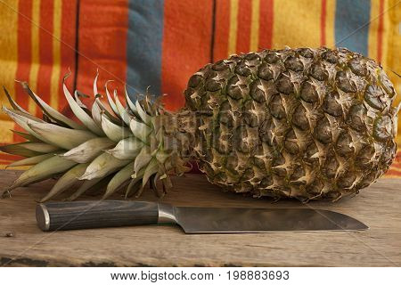 Ripe pineapple and a large knife on the table before cooking still life