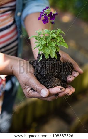 Close-up of woman holding sapling plant in garden