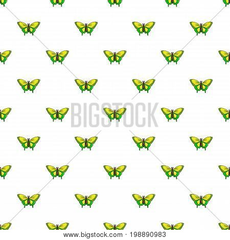 Goliath birdwing butterfly pattern in cartoon style. Seamless pattern vector illustration