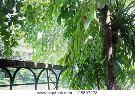 Outdoor green plant ornamental in garden stock photo