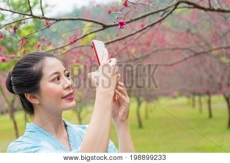 closeup of elegant smiling female tourist sightseeing in japan full blooming cherry flowers garden and wearing kimono clothing using mobile cell phone taking beautiful picture. poster