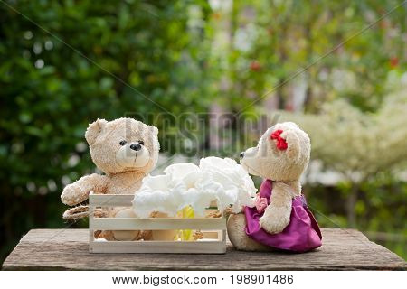 Two teddy bears in love sitting on wooden box and wood. And white flowers Concept of love understanding and tenderness. With lens flare Natural background