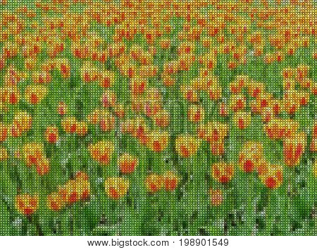 Illustrations. Cross-stitch. Field of bright yellow and red tulips.