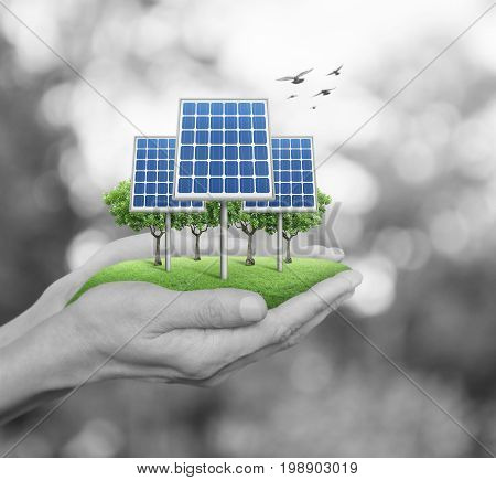 Solar cell in man hands over blur green tree with birds Ecology power and energy concept