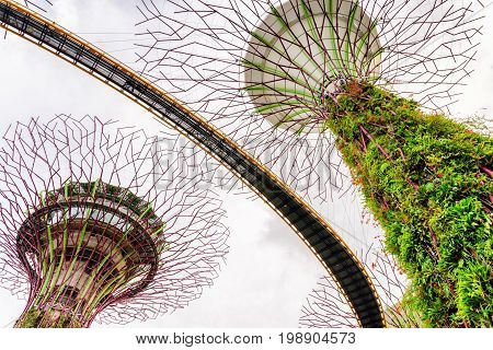 Amazing Bottom View Of The Supertrees, Gardens By The Bay