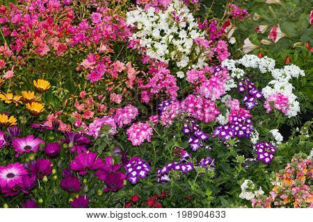 A Flowerbed With Many Differnt Plants.