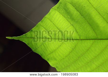 Green Cell Structure Texture Of Nature Leaf Background