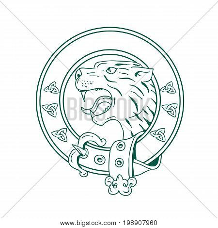 Illustration of a Scottish Wildcat or Highlands tiger Head viewed from side set inside Celtic Belt done in hand drawn sketch drawing.